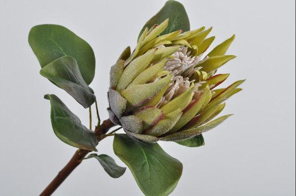 Billede af Grøn Protea