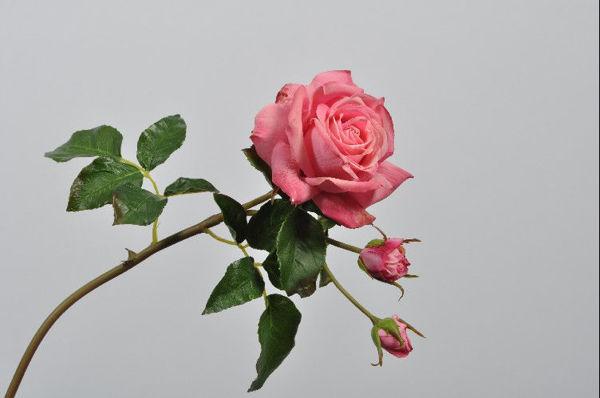 Billede af Pink Rose